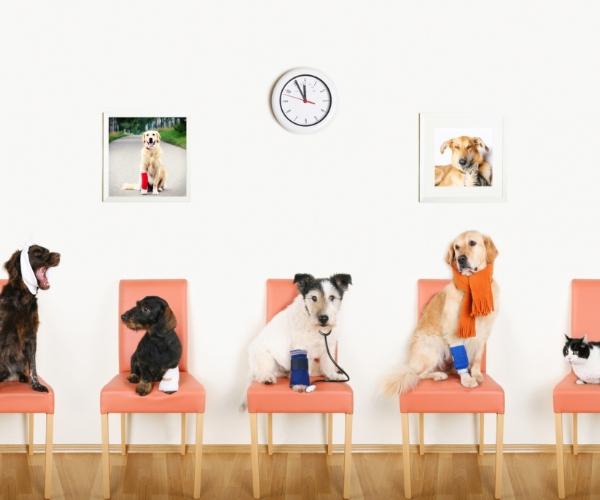 Psy wkolejce czekający nakrzesłach